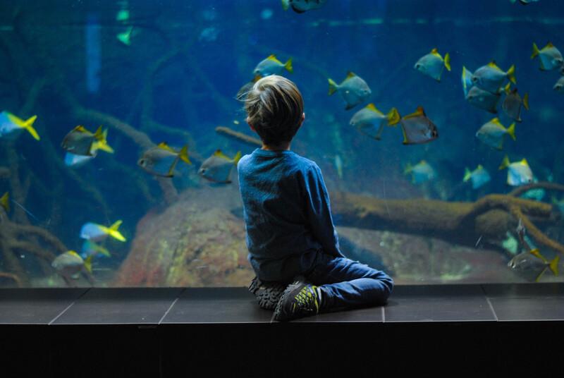 child looking at an aquarium tank image