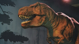T-Rex dinosaur - museum