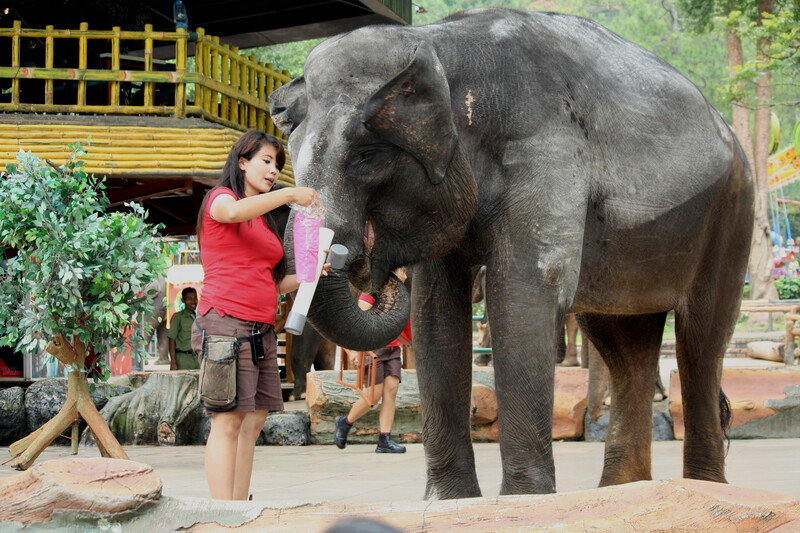 elephant and zookeeper