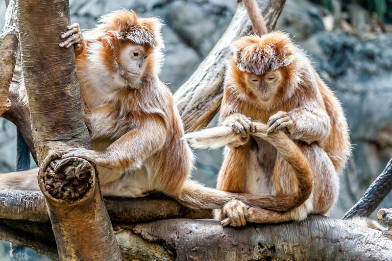 monkeys at a zoo