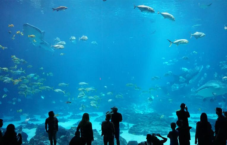 people at an aquarium