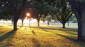 beautiful park scene