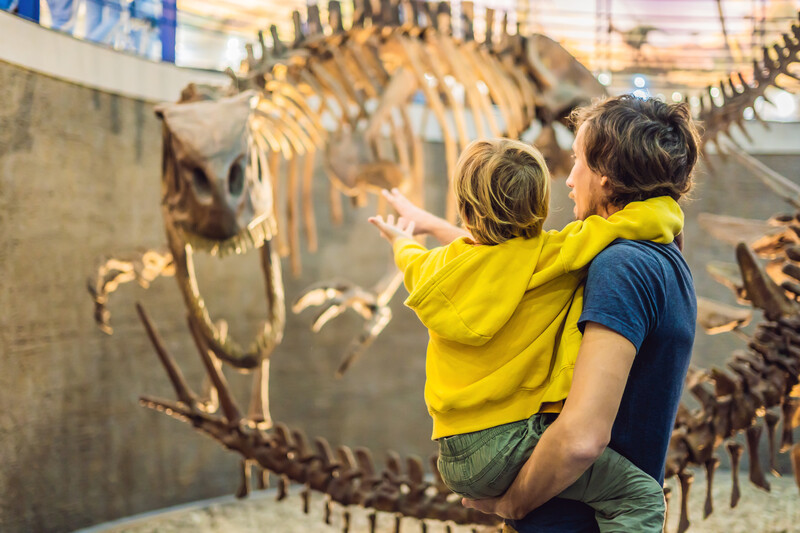parent and child looking at dinosaur fossil