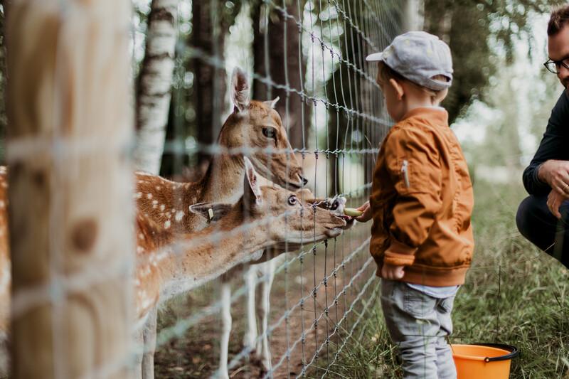 child at petting zoo