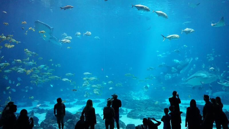 family at an aquarium